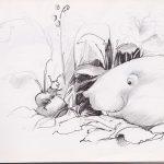 Schets_Illustratie